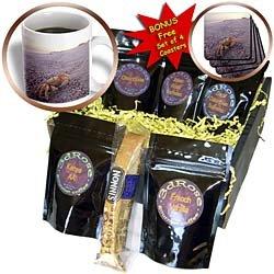Danita Delimont - Crustaceans - Crab, Crustacean, Siyull Island, Red Sea, Egypt-AF14 AKA0042 - Ali Kabas - Coffee Gift Baskets - Coffee Gift Basket