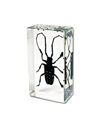 Spotted Longhorn Beetle Rectangular Paperweight (2.8\