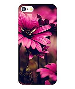 Case Cover Multicolour Printed Back Cover For Apple Iphone 5/5S/5C
