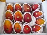 宮古島マンゴー市場 産地直送 とれたて! お手頃マンゴー(訳ありマンゴー) 約10kg(20~30ヶ程度) のし無し ランキングお取り寄せ