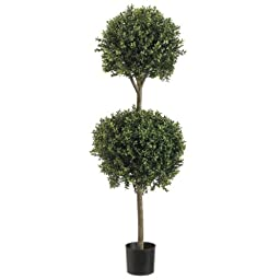 4\' Double Ball-shaped Boxwood Topiary in Plastic Pot Two Tone Green