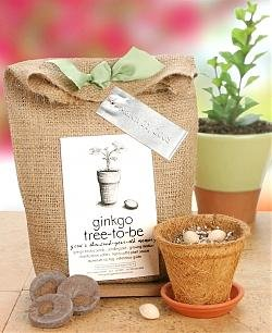 Ginkgo Tree Kit
