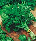 Premier Seeds Direct HRB21 Parsley Italian Giant Flat Finest Italian Seeds (Pack of 2500)