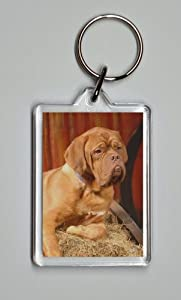 Dogue de Bordeaux Photo Keyring 5.5cm x 4cm