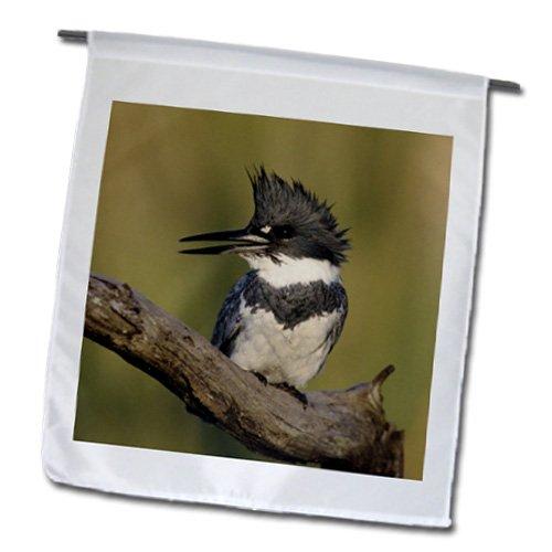 3dRose fl_84426_1 Garden Flag, 12 by 18-Inch, Belted Kingfisher Bird, Rio Grande Valley, Texas-NA02 RNU0400-Rolf Nussbaumer