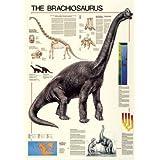 Dinosaur Brachiosaurus Poster