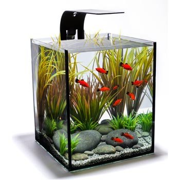 Ecoxotic Ecopico Desktop Aquarium System With Led Arm And Filter, 5-Gallon