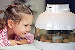 Egg Incubator Fully Automatic Egg Turning Auto Temperature Keep Easy to Observe 10 Eggs Small Poultry Hatcher for Chickens Ducks Goose Birds (Color: Egg Incubator, Tamaño: 10 eggs hatcher)