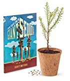 Tree Growing Kit - Giant Sequoia - by Jonsteen Company