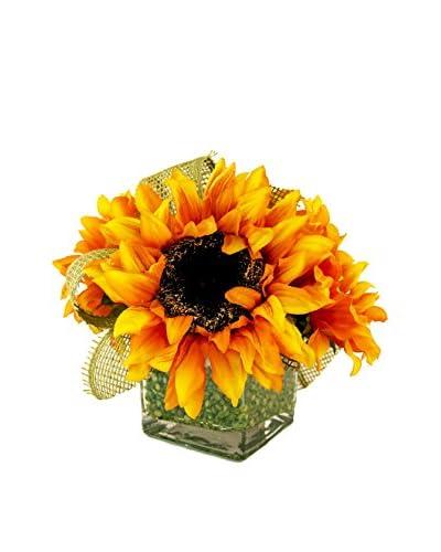 Creative Displays Orange Sunflower in Green Lentil Cube, Orange/Brown/Green