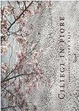 Ciliegi in fiore (8817020249) by Jake Rajs