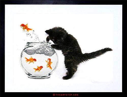 PHOTO BLACK KITTEN CAT GOLDFISH BOWL FRAMED PRINT F12X2819
