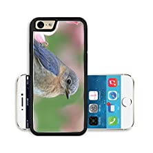 buy Liili Premium Apple Iphone 6 Iphone 6S Aluminum Snap Case Male Eastern Bluebird Sialia Sialis In A Dogwood Tree With Flowers Image Id 9442952