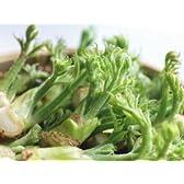 Oishiina Shop 山菜 たらの芽〈タラノメ〉 1ケース 1Kg前後 20パック前後