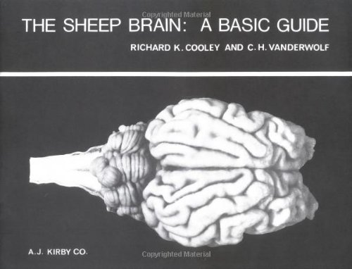 The Sheep Brain: A Basic Guide