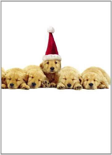 Avanti Christmas Cards, Christmas Puppies, 10