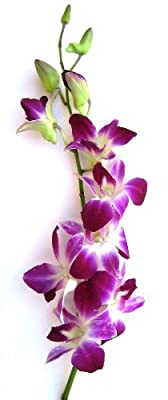 Fresh Flowers - Purple Dendrobium Orchids by Just Orchids