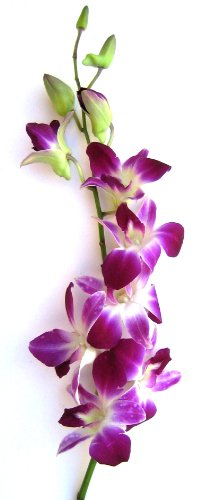 Fresh Orchids- 10 Long Stemmed Purple Dendrobium