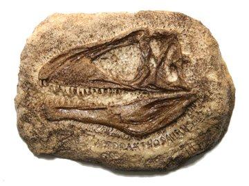 (DM 321) Acrocanthosaurus Plaque