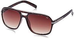 Fila Gradient Square Men's Sunglasses - (SF8973K587V1SG|58|Brown Gradient)