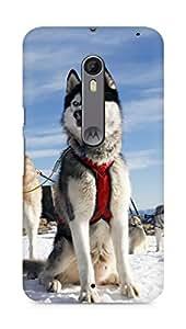 Amez designer printed 3d premium high quality back case cover for Motorola Moto X Style (Husky Dog Alaska Snow)