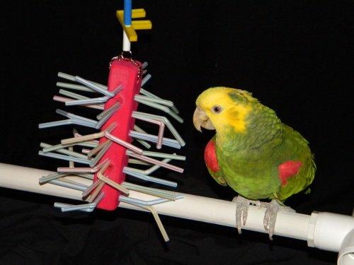 Cheap Porcupine Parrot Toy for Amazon Parrots and African Grey Parrots (Junior) (B003RAFKZU)