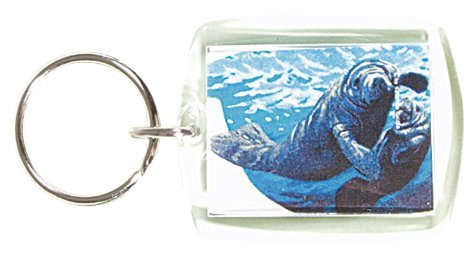 """Plexiglas Schlüsselanhänger mit MOTIV """"SEEROBBE"""" NEU (03492) Gr. ca. 5cm x 4cm"""