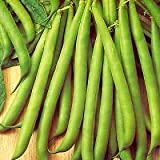 DWARF FRENCH BEAN - TENDERGREEN - 125 SEEDS