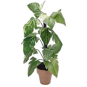 41t%2B4dwxupL._SY300_ Monstera Dollhouse Plant on phalaenopsis plant, pineapple plant, aspidistra plant, red and green leaf house plant, orchid plant, momordica plant, bird of paradise plant, xanadu plant, dieffenbachia plant, prayer plant, mammillaria plant, anthurium plant, aralia plant, banana plant, alocasia plant, bucephalandra plant, yucca plant, liana plant, cheese plant, musa plant,