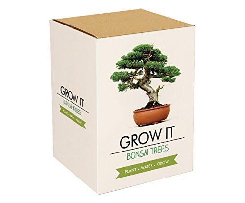 gift-republic-grow-it-grow-your-own-bonsai-trees