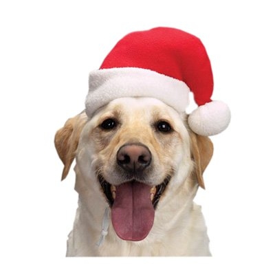 Dog Santa Hats - Small