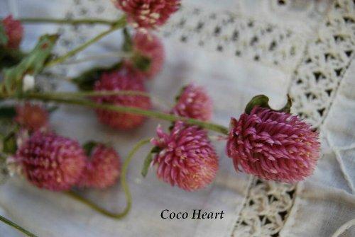 ~Coco Heart~ 千日紅 ピンク (木の実・ドライフラワー)