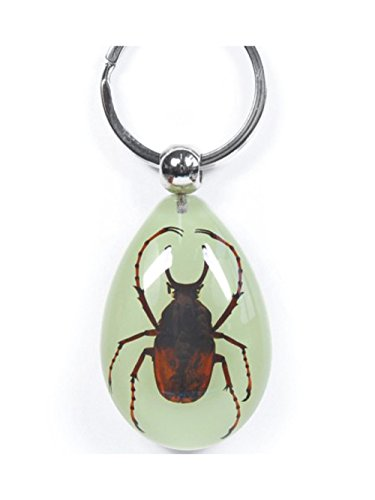 WeGlow International Real Long Arm Stag Beetle Glow in The Dark Keychain - 1