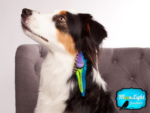 Moonlight Feather Hair Extension Feather Clips BUSTER Puppy Couture Clips