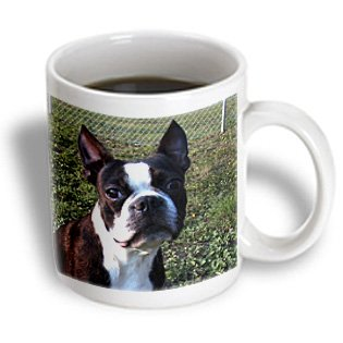 3Drose Mug_49296_1 Boston Terrier Portrait Ceramic Mug, 11-Ounce