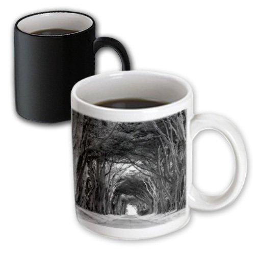 Danita Delimont - Charles Gurche - Trees - Usa, California, Point Reyes National Seashore, Cypress Trees - 11Oz Magic Transforming Mug (Mug_189937_3)