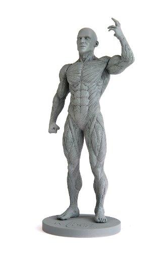 List Of Anatomy Human Figure Mannequins For Artists Parka Blogs