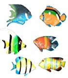 Tropical fish, 6 pcs, assorted