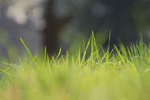 Sky Wall Decals Fresh Grass Zoomed With Telephoto Lens - 48 Inches X 32 Inches - Peel And Stick Removable Graphic