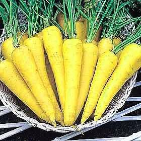 Buy Solar Yellow Carrot 150 Seeds &#8211; FREE SHIPPING ON ADDITIONAL HIRTS SEEDS ORDERED AND PAID WITH ONE PAYMENT!