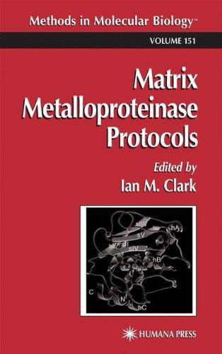 Matrix Metalloproteinase Protocols (Methods In Molecular Biology)