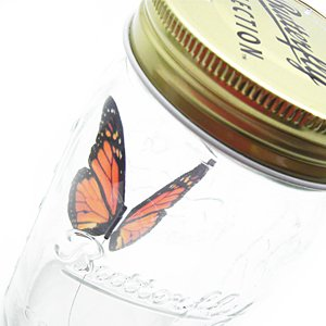 Butterfly in a Jar - Monarch