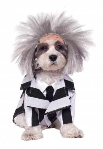 Yes, even your pet can join in! Cute Beetlejuice Pet Costume - S, M, L or X-Large