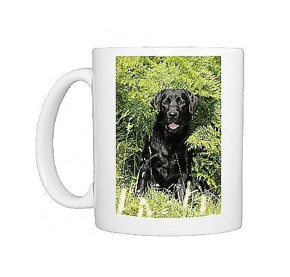 Photo Mug Of Jd-20947 Dog. Black Labrador Sitting In Ferns From Ardea Wildlife Pets front-621857