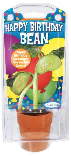 Dunecraft Happy Birthday Bean Science Kit