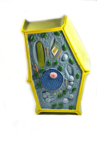 Eisco Labs Plant Cell Model; free standing 50 million times enlarged; 10