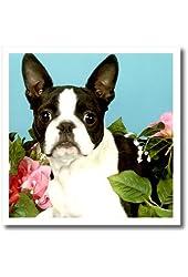 Dogs Boston Terrier - Emma Boston Terrier - 10x10 Iron on Heat Transfer for White Material (ht_893_3)