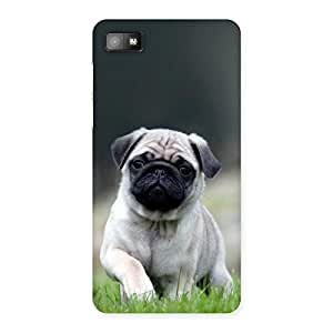 Ajay Enterprises Cuty Pug Dog Grass Back Case Cover for Blackberry Z10