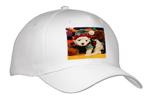 cap_201595 DOGS - MALTESE - SANTA'S LITTLE HELPER - WHITE MALTESE PUPPY IN GREEN AND RED ELF SUIT - Caps
