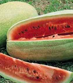 premier-seeds-direct-wml06-water-melon-charlston-gray-finest-seeds-pack-of-60
